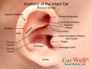 Anatomy of What are baby ear deformities? - EarWell®